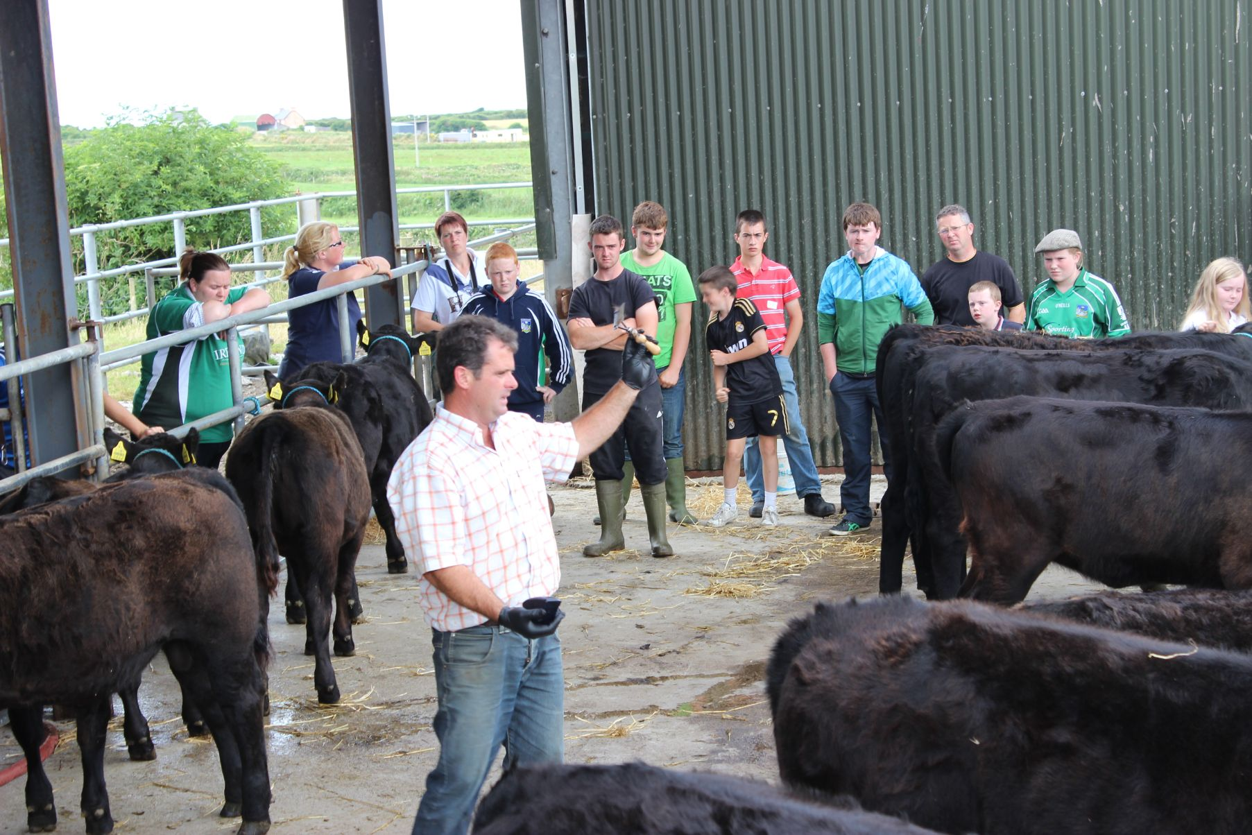 Matthew Goulding, Youth Development workshop, Angus cattle, farm, young breeders