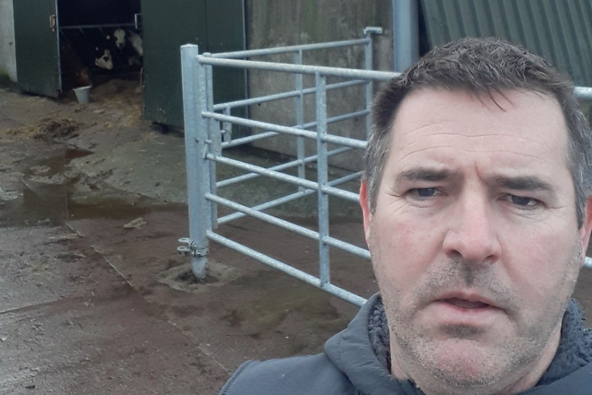 Jerh O'Sullivan, calf-to-beef system, farmyard, auctioneering in Ireland, Cork Co-operative Livestock Marts
