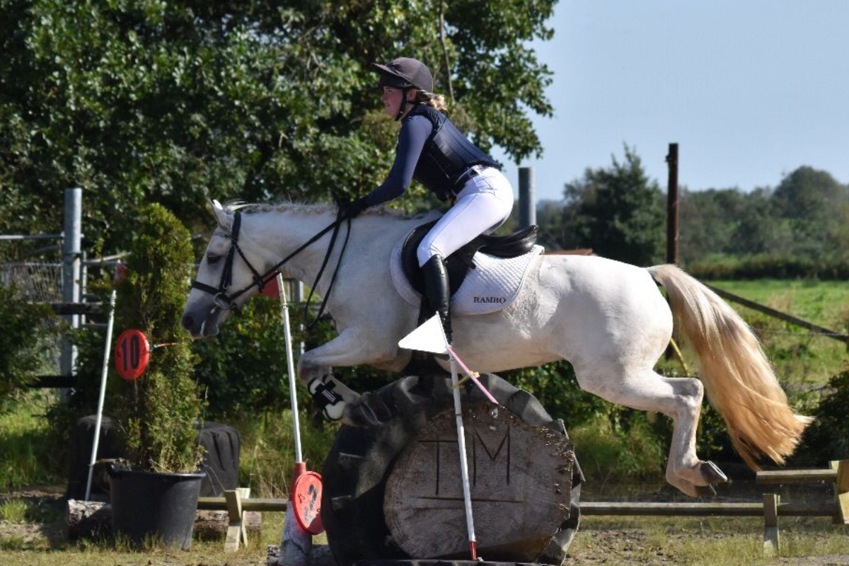 horses, equine, horse jumping,