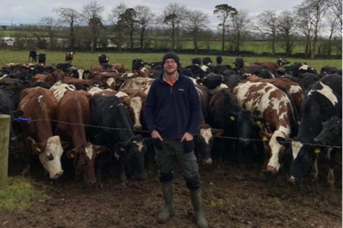 young dairy farmer, dairy farming, dairy farmer, cows