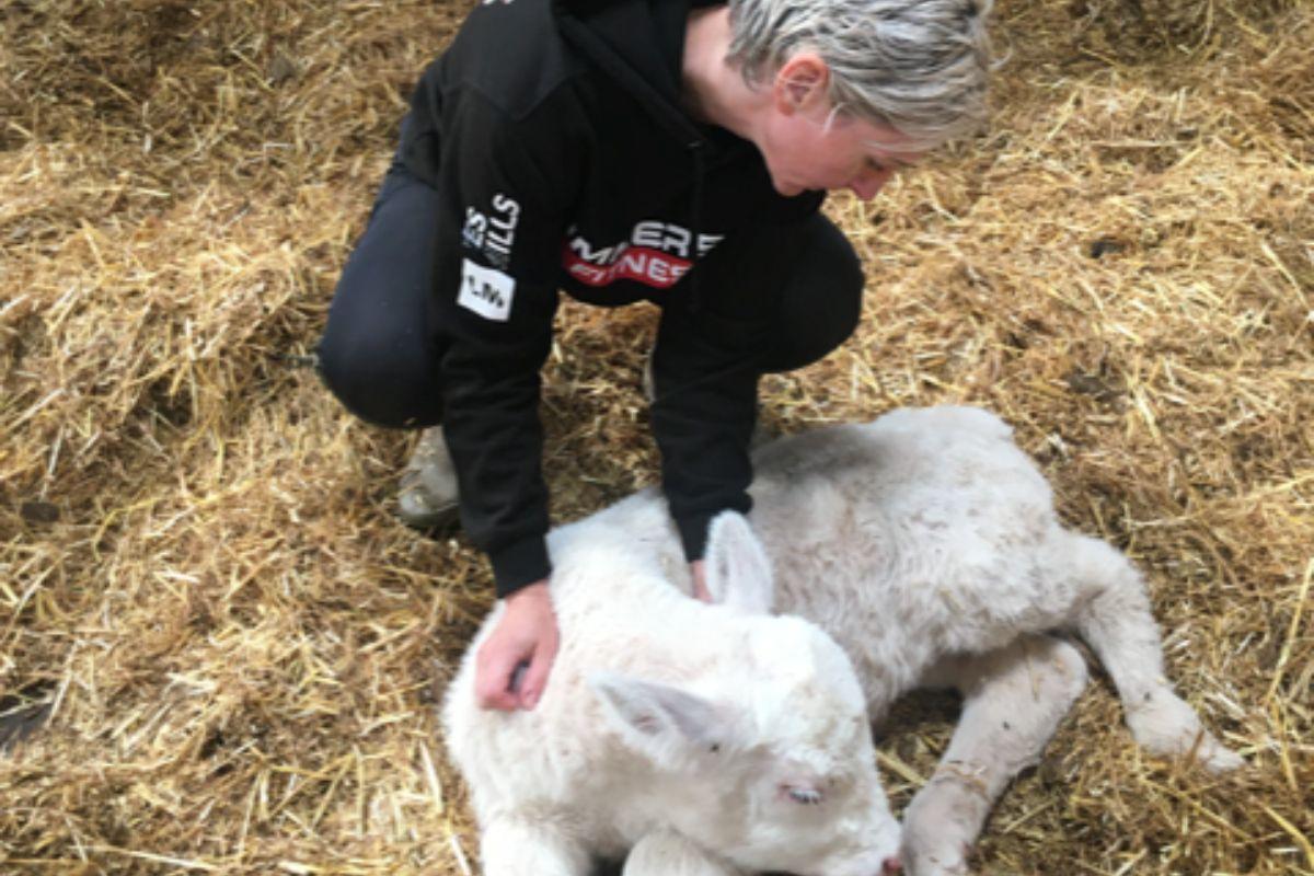 Charolais, polled Charolais, cattle, farm girl, women in farming