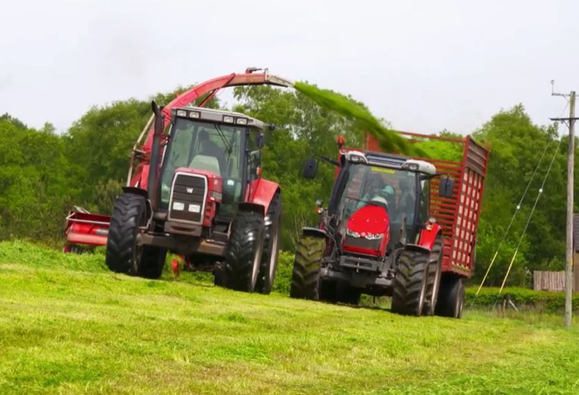 silage, tractors, machinery, silage making, season silage, field, silage pit, Rare Breed lockdown