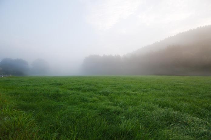 grassland, farm, farming, arable farming, grassland management, grass