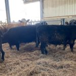 cattle sheds,