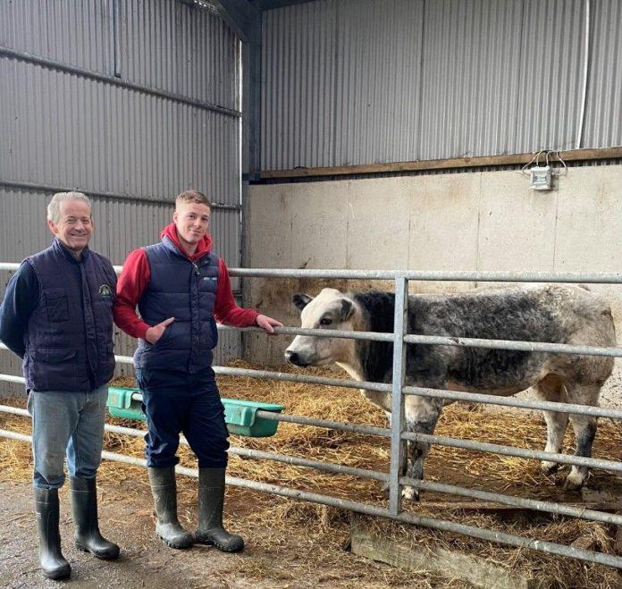 suckler farming, suckler farmers, Suckler Focus, suckler farming in Ireland, roan cattle