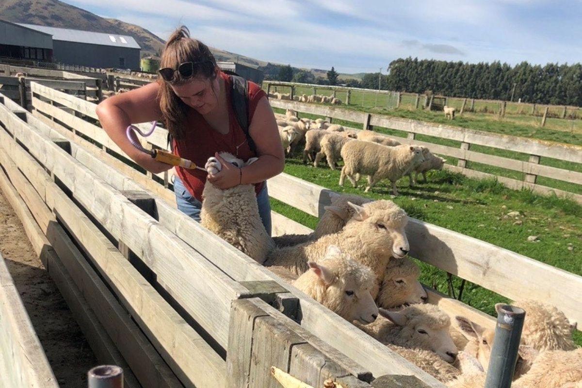 Leyla Byrne,Sheep, sheep farming,