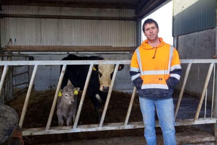 Tony Diskin, suckler farming,