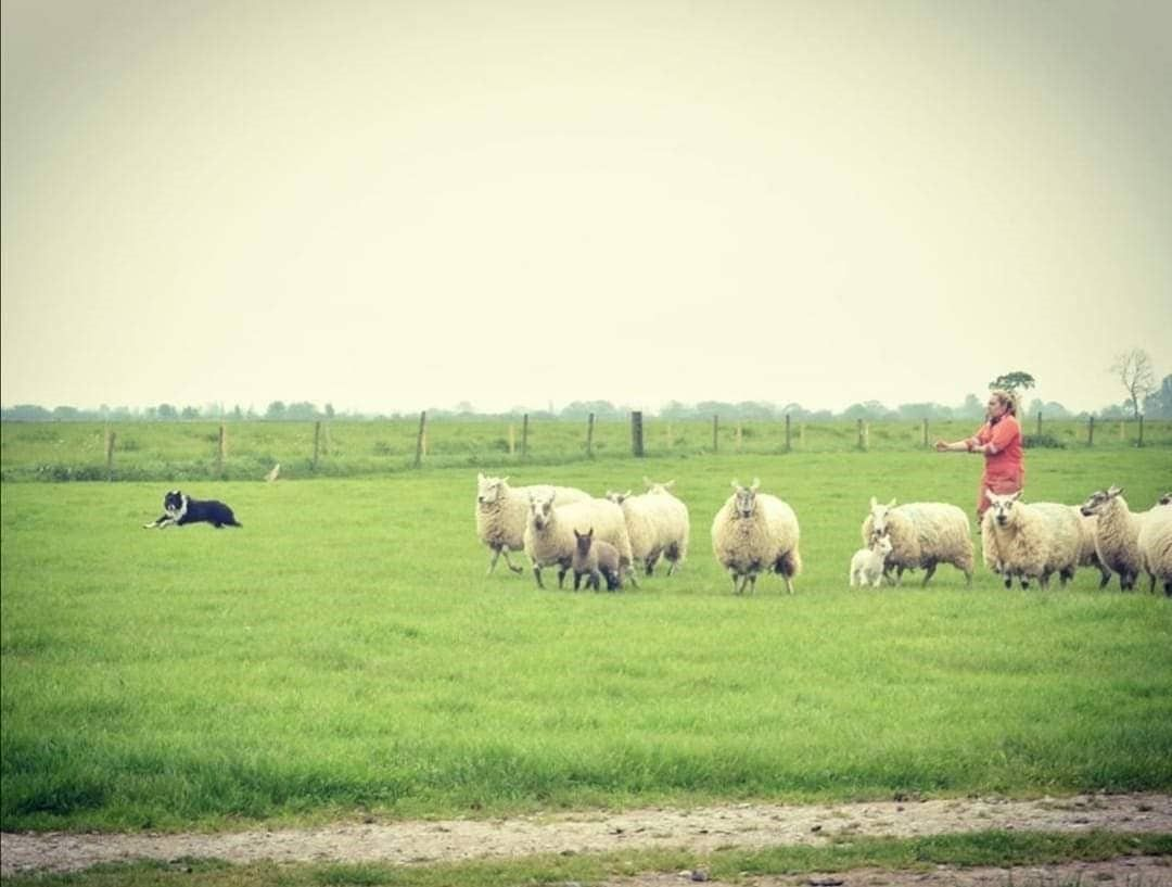 Kildalton Agricultural College, Emma Tobin, sheep farming, college farm