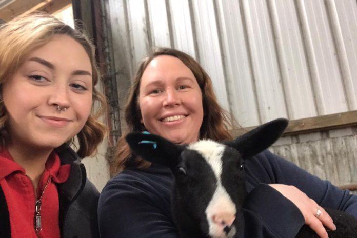 Allstar Zwartbles, farm girls, sheep farming