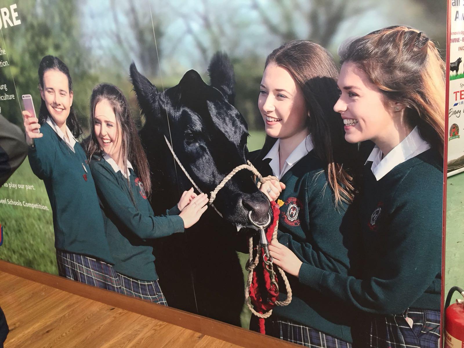 Certified Irish Angus Schools