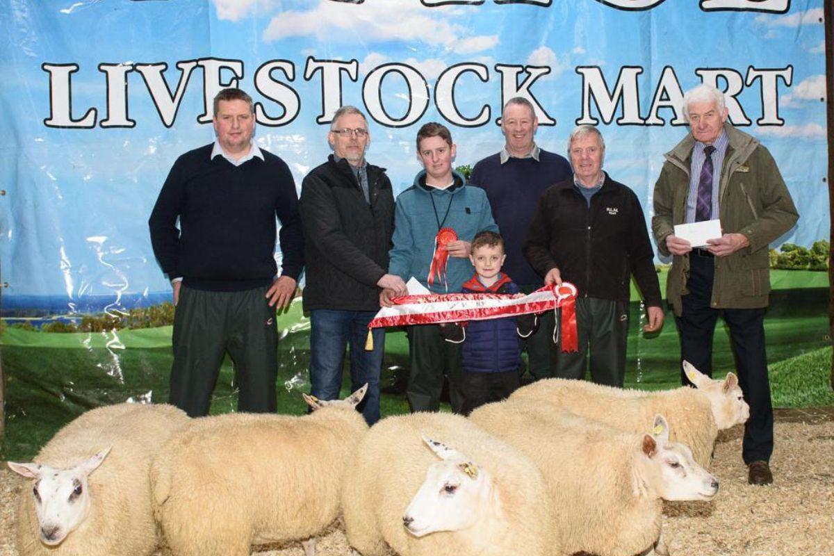 Raphoe Mart, sheep mart, mart report, mart