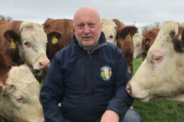 Fleckvieh Irl, dairy farming, dairy cattle