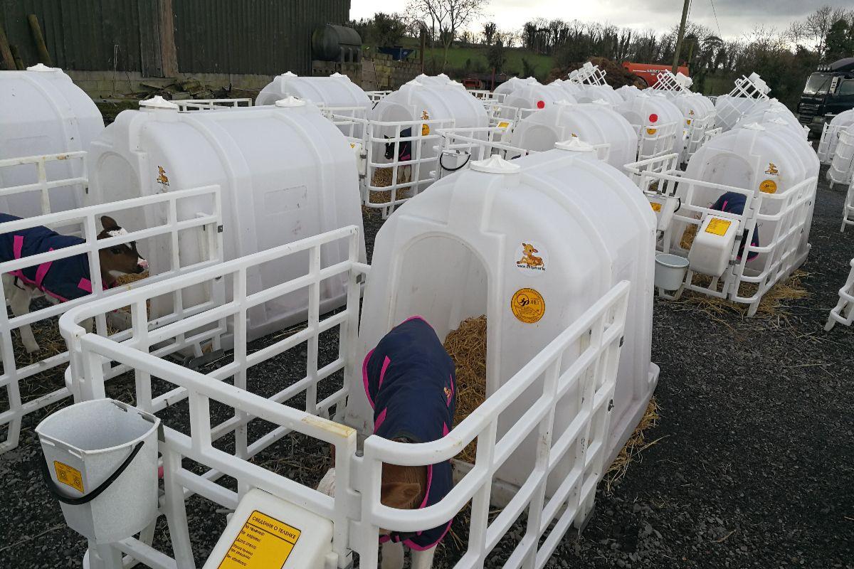 calf hutches, farming, dairy farming