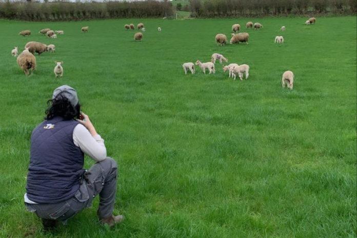 sheep, sheep farming, sheep farmer, Clodagh Hughes, farm girl