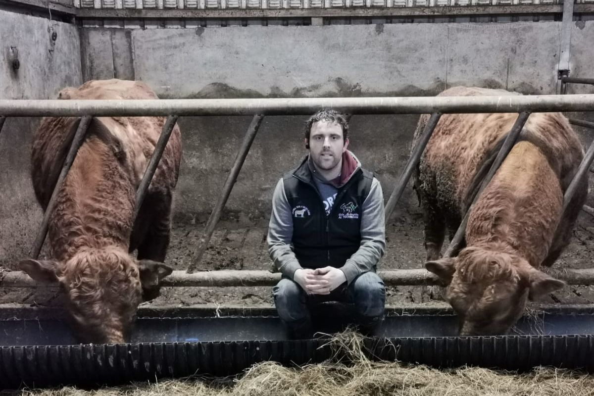 Western Bull Hire, Limousin