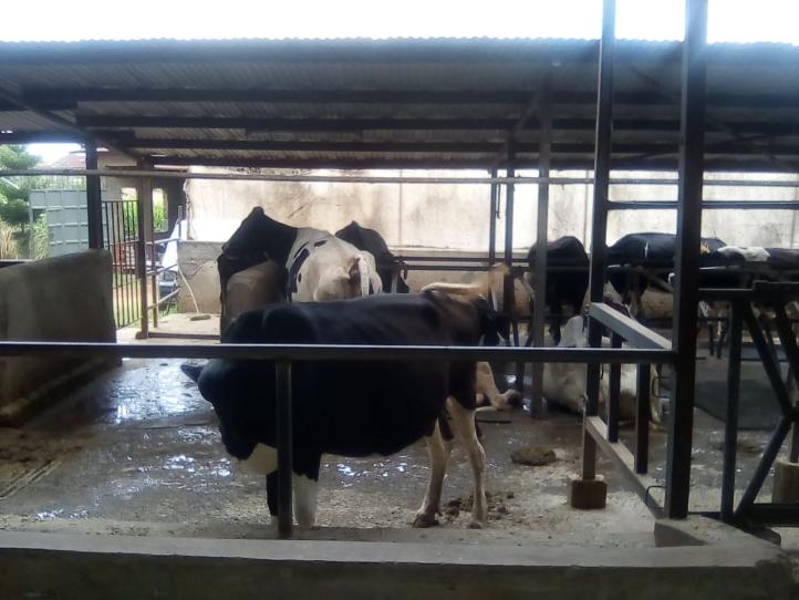 Dairy farming in Kenya, dairy farmer