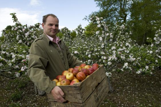 Con Traas, apple farming, apple farmer, Irish apple farming