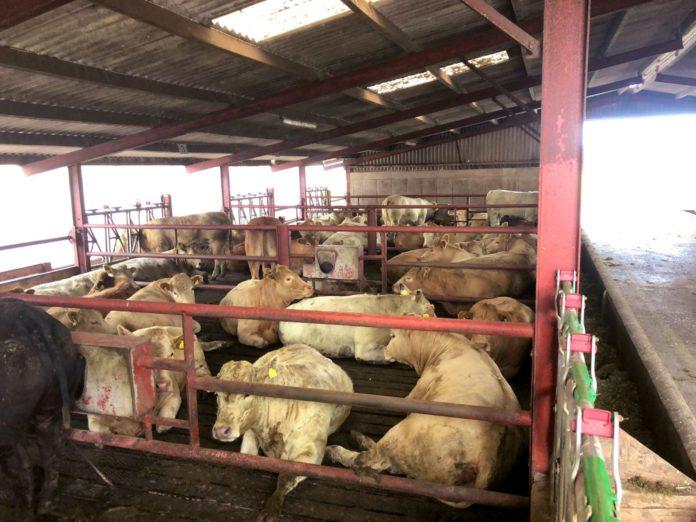 UCD Lyons Farm, agri careers, jobs Ireland, agri jobs Ireland