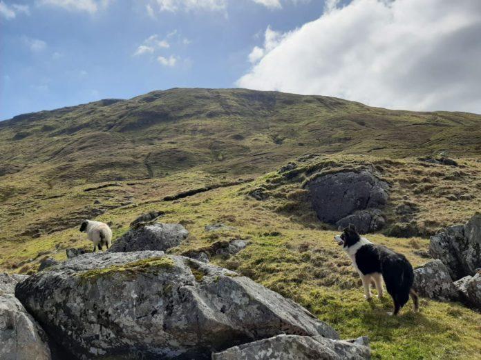 Organic sheep farmer, organic sheep farming