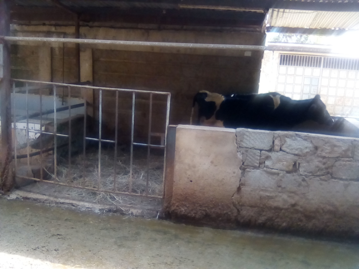 farming, dairy farmers
