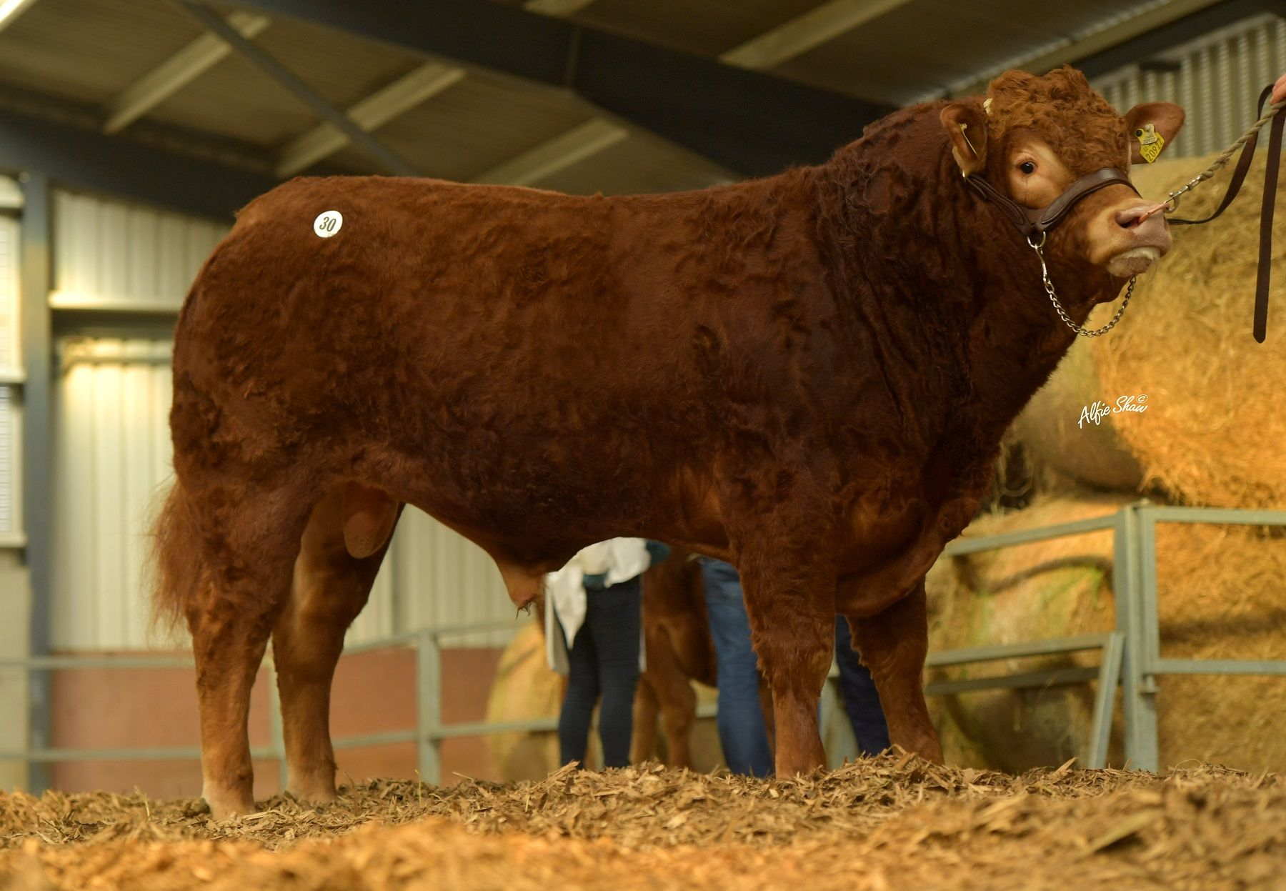 Oldtown Price €4400,Limousin society March 2021 report