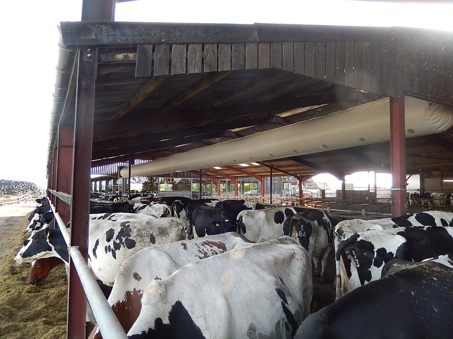 VentTube Cool, dairy cows, dairy farming