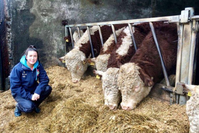 Anna Jacob, Hereford cattle, Farm Girl, UCD ag science