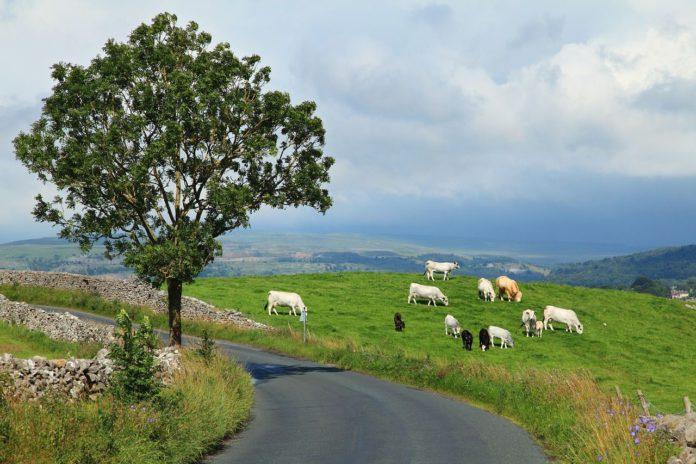 grassland management,