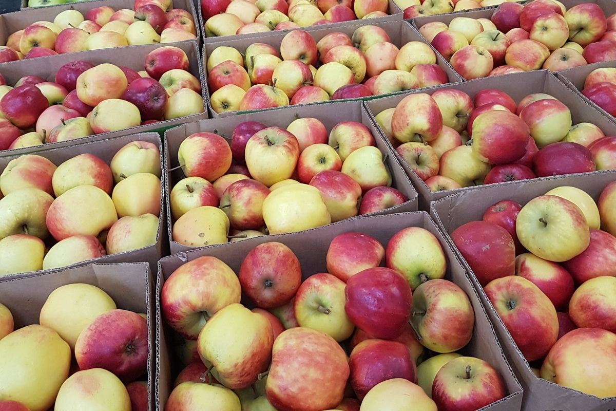 The Apple Farm, field, farming news, farming news Ireland