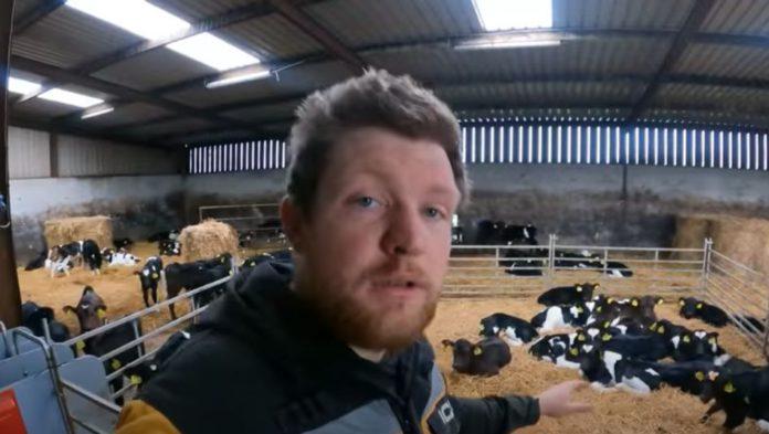 Farmer Phil, calf rearing