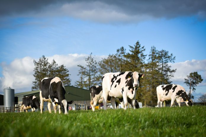 Windfield Holsteins, Holstein breeder