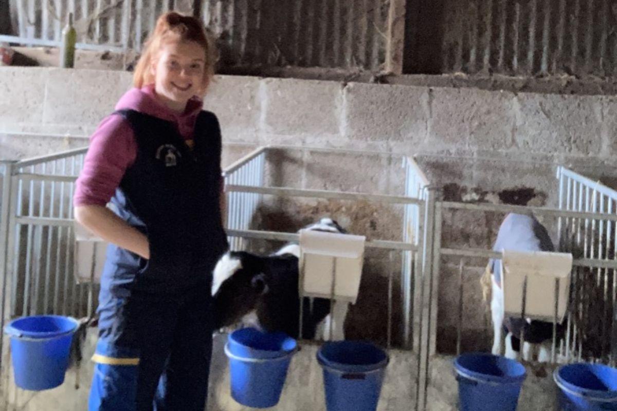 Calf rearer, calf rearin