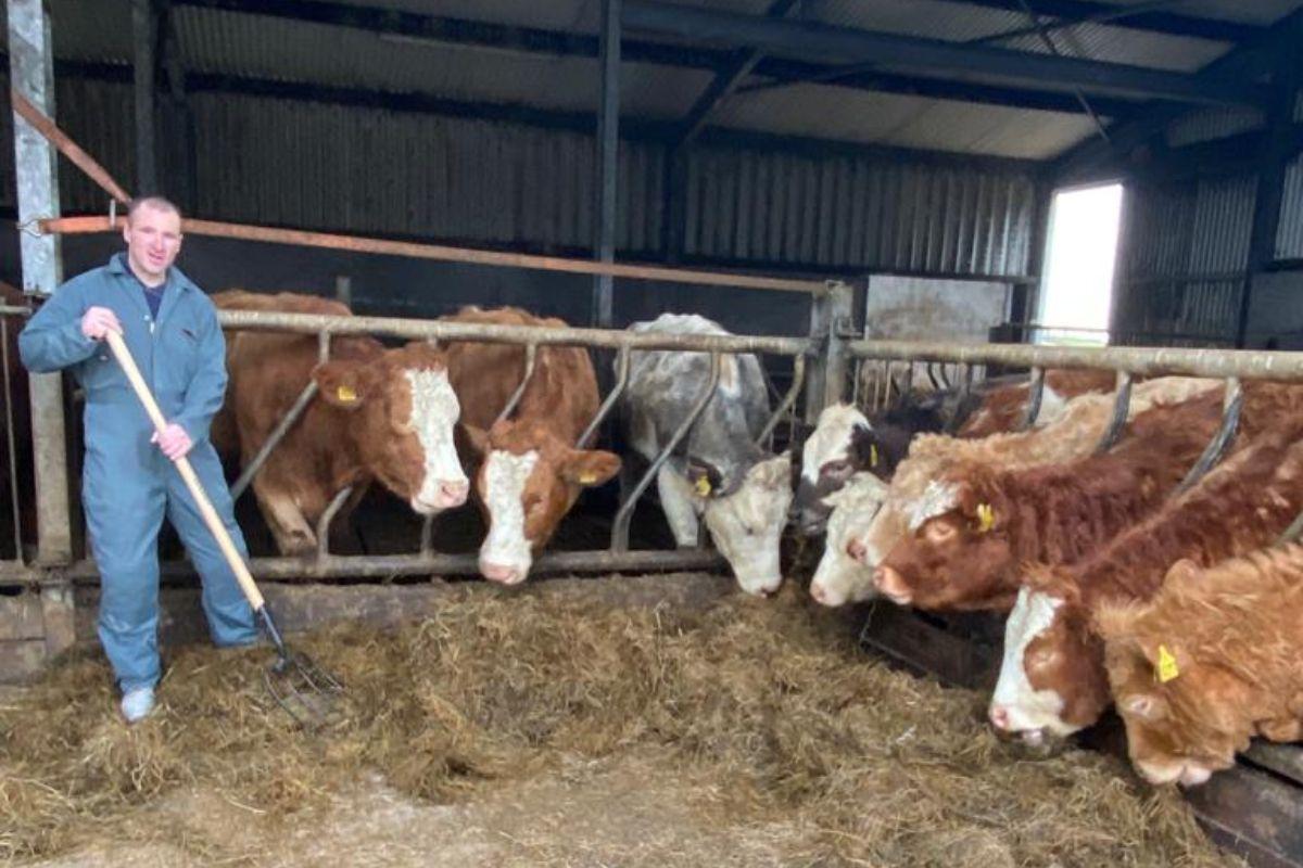 Martin Donaghey, suckler cows