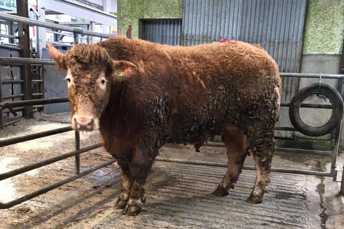 Headford Mart, Headford Mart report, cattle prices, mart prices, mart report