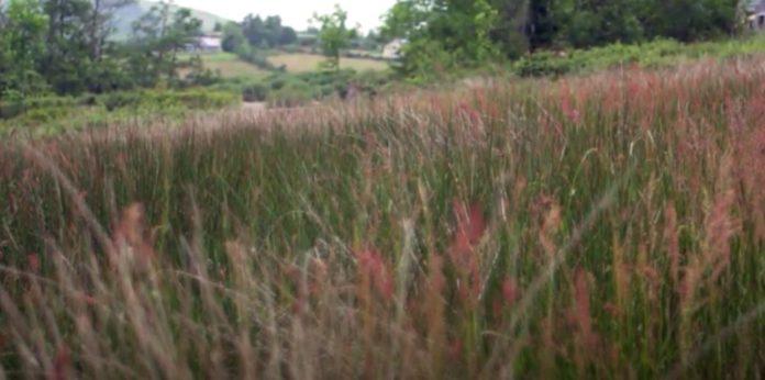 grassland management, top tips, farming news, tackling rushes,