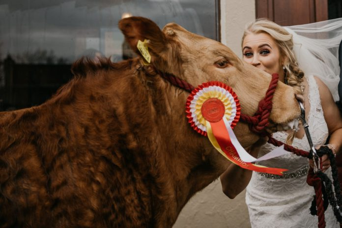 Denise Sweeney, farm girls, Limousin cattle