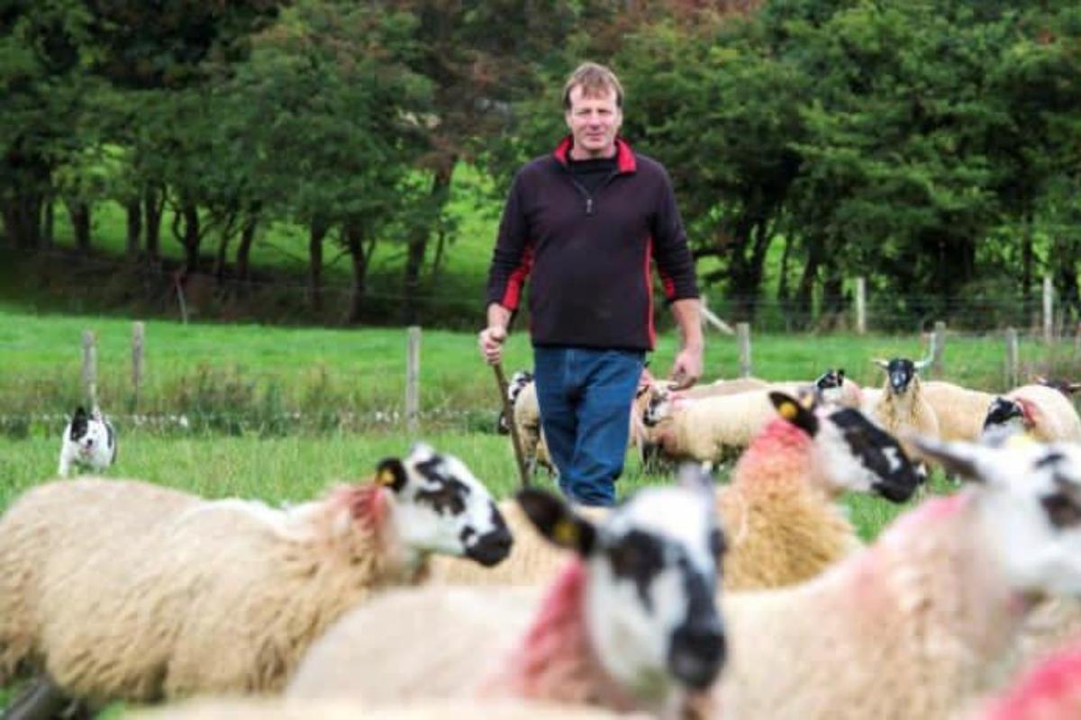 Joe Scahill, sheep, sheep farming, sheep farmer, sheep farming in Ireland
