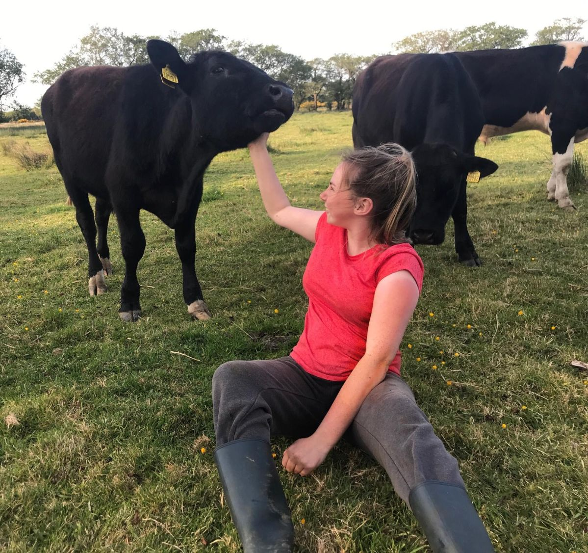 beef farming, beef farmers