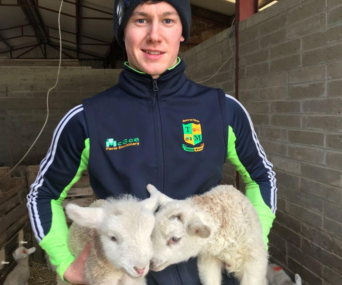 Adam Hanratty, sheep, sheep farmer, Texel sheep, Lleyn sheep