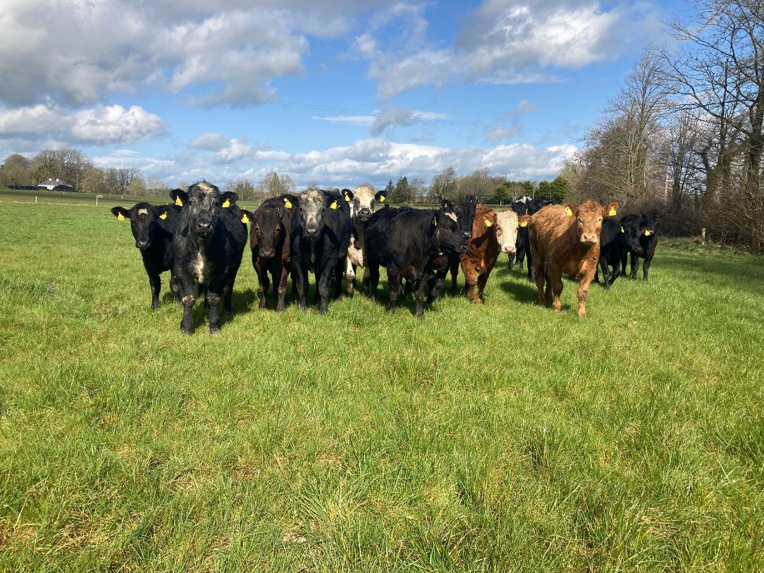 drystock farming, beef farmers