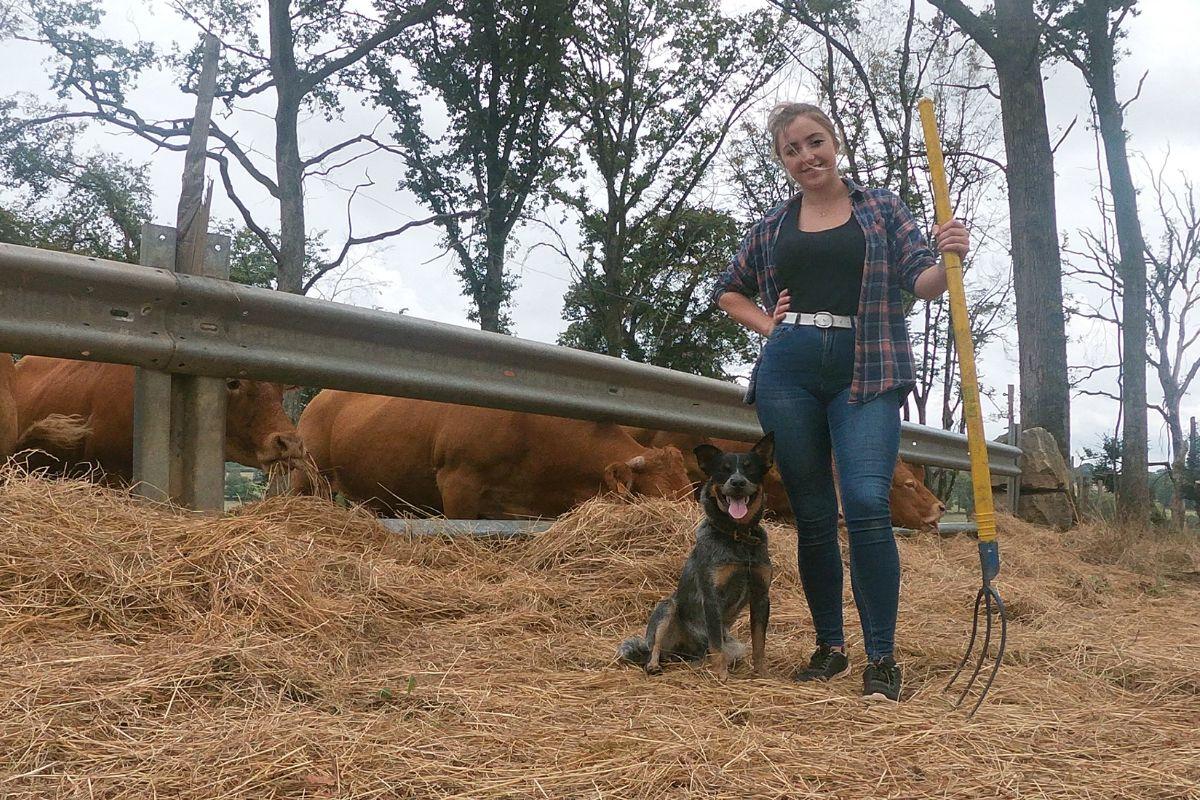 Farming Life at La Forge, beef farming, suckler farming, farming news, France, Limousin cattle