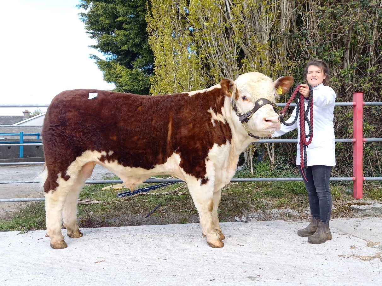 Ardmulchan Riddick, Hereford cattle, beef prices farming news