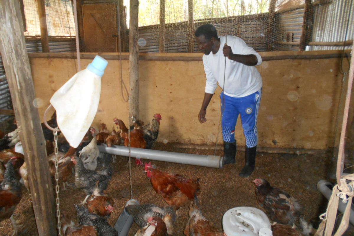 farming in Africa, farmers, hens, farming news
