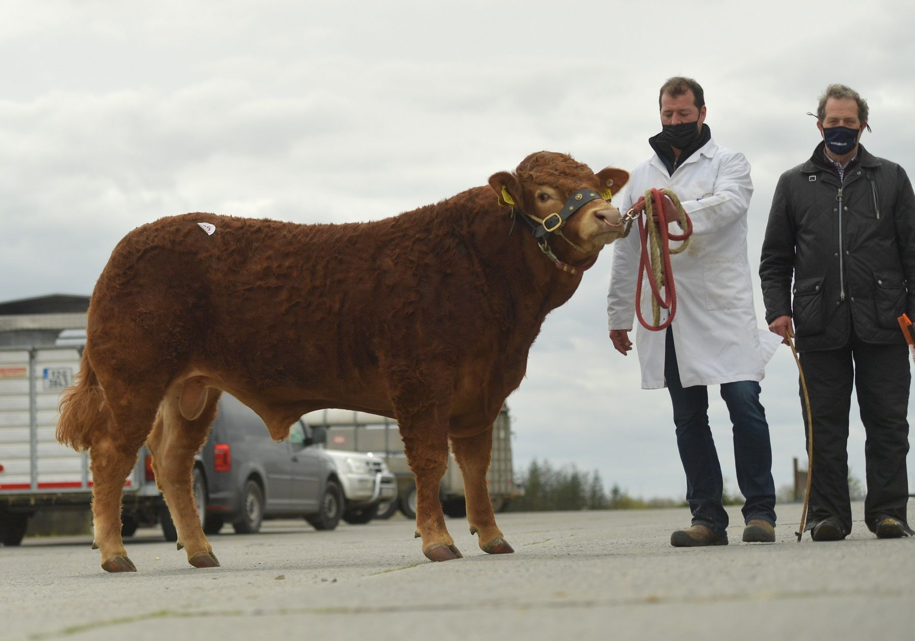 Newtown Rodger, farming news, Limousin sale Athenry report