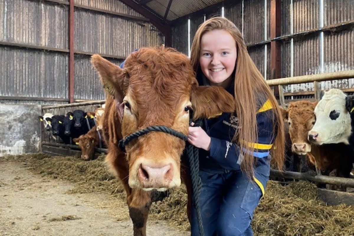 Limousin cattle, suckler farming, suckler farmer, farm girl, mixed farm enterprise in Northern Ireland