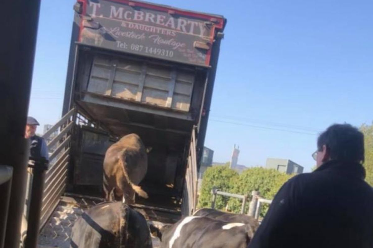 T. McBrearty Livestock Haulage, livestock haulage, beef prices