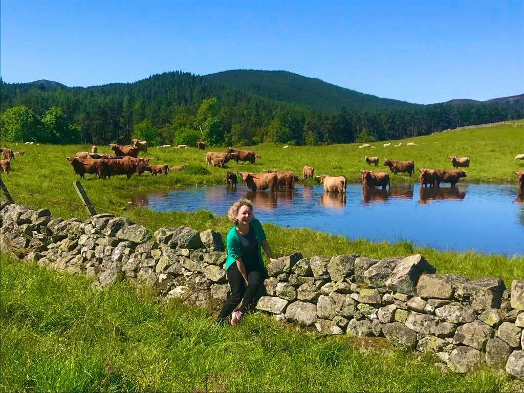 Balmoral Castle, Highland fold, Highland cattle