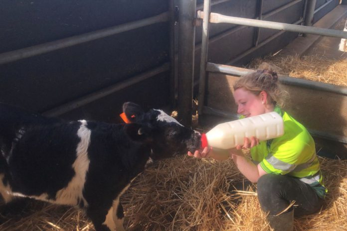 Jemma Wilson, dairy farming in Australia, dairy news, farming news