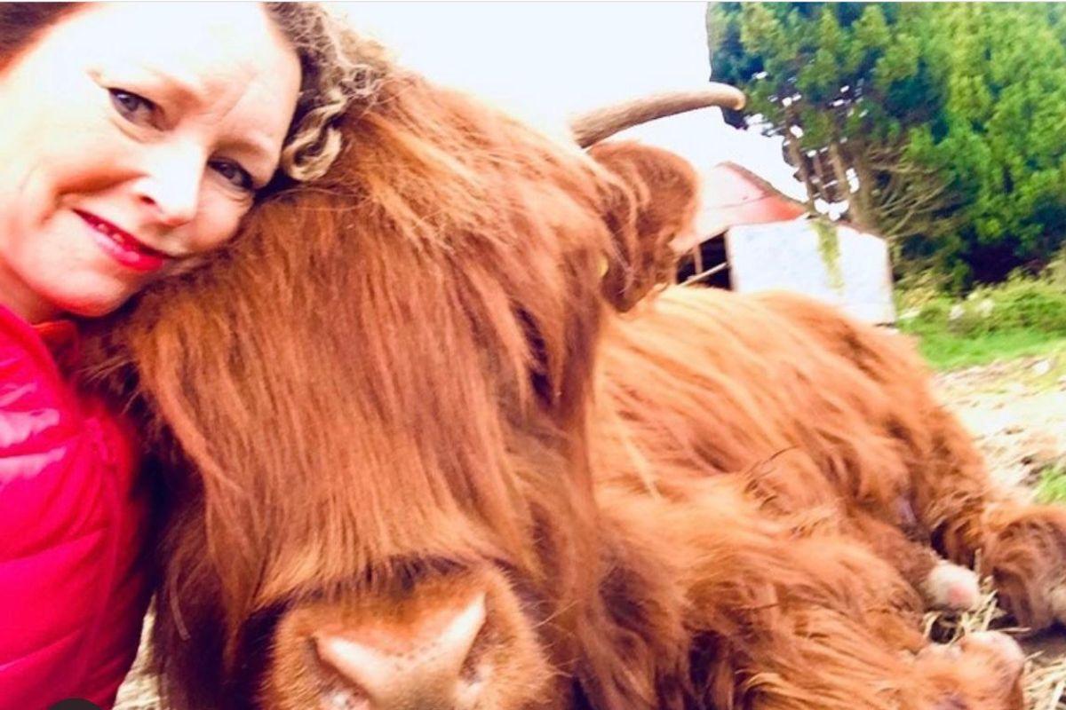 Michelle Shaughnessy, Highland cattle,