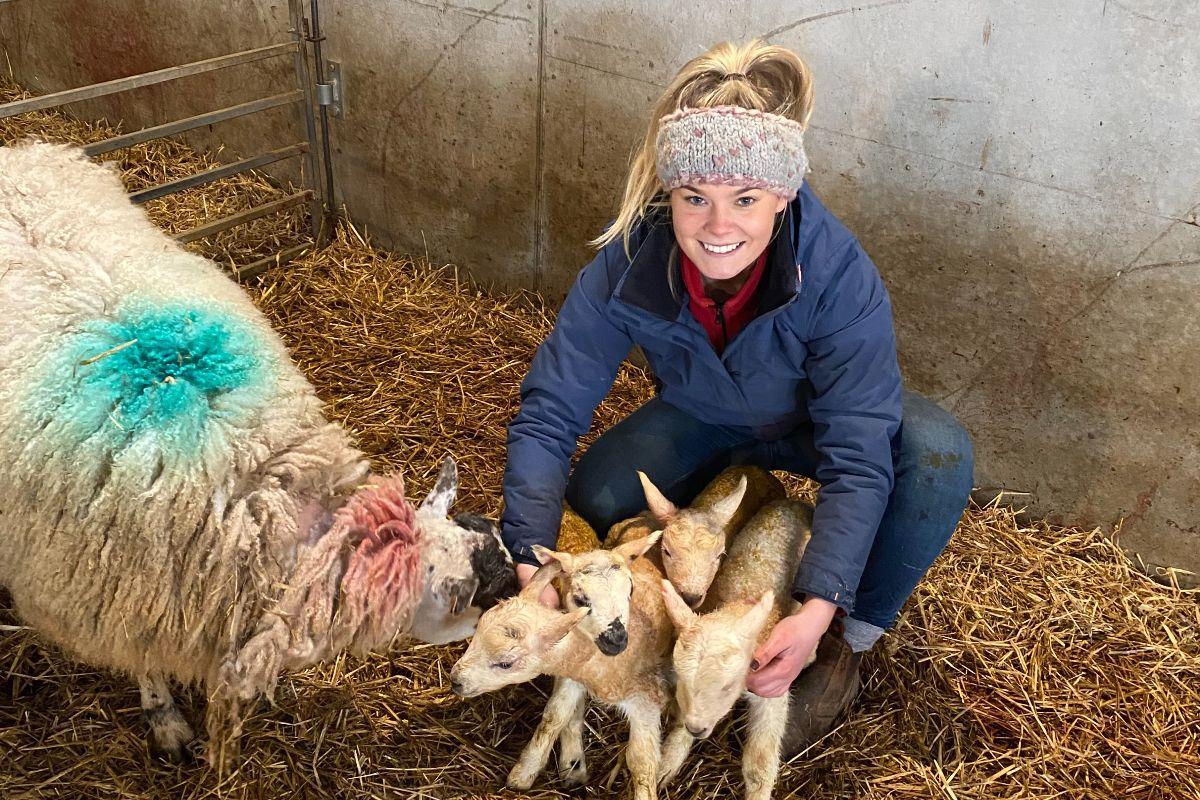 Rebecca Adams, sheep farming, sheep farm,